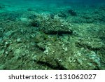 fish at the bottom of the... | Shutterstock . vector #1131062027