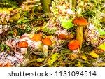 mushroom family in autumn... | Shutterstock . vector #1131094514