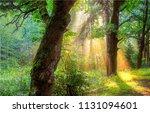 morning forest sunlight shadows ...   Shutterstock . vector #1131094601
