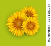 yellow sunflowers summer... | Shutterstock .eps vector #1131101789