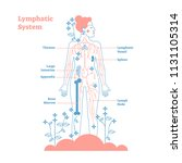 artistic lymphatic system... | Shutterstock .eps vector #1131105314