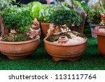 small decorative buxus... | Shutterstock . vector #1131117764