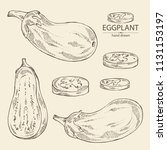 collection of eggplant  full... | Shutterstock .eps vector #1131153197