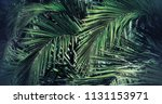 palm leaves captured in isla...