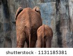 Behind Of African Elephants...