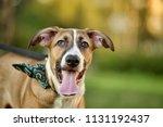 red dog portrait | Shutterstock . vector #1131192437