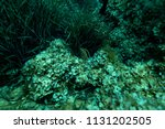 sea grass at the bottom of the... | Shutterstock . vector #1131202505