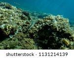 the bottom of the aegean sea... | Shutterstock . vector #1131214139