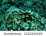 the bottom of the aegean sea... | Shutterstock . vector #1131214145