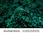 the bottom of the aegean sea... | Shutterstock . vector #1131214151