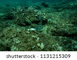 the bottom of the aegean sea... | Shutterstock . vector #1131215309