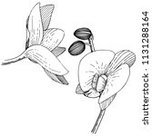 orchids in a vector style... | Shutterstock .eps vector #1131288164