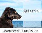 dog at ocean  gutschein means... | Shutterstock . vector #1131322211