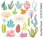 seaweeds. aquarium plants ... | Shutterstock .eps vector #1131371864