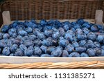 Fresh Ripe Plums Of Blue Color...