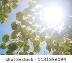 the sun shines through the... | Shutterstock . vector #1131396194