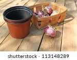 Basket with the bulbs of hyacinths and flowerpots on a wooden table - stock photo