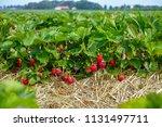 New Harvest Of Sweet Fresh...