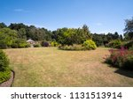 parched dry lawn during a... | Shutterstock . vector #1131513914