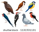 Colorful Bird Collection....
