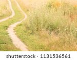 the road to the nature of the... | Shutterstock . vector #1131536561