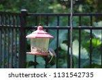 chickadee titmouse songbird... | Shutterstock . vector #1131542735