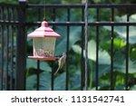 chickadee titmouse songbird... | Shutterstock . vector #1131542741
