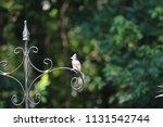 chickadee titmouse songbird... | Shutterstock . vector #1131542744