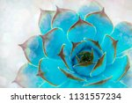 bright green blue cactus... | Shutterstock . vector #1131557234
