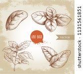 basil leaves set. hand drawn... | Shutterstock .eps vector #1131561851