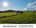 preparation for a balloon flight | Shutterstock . vector #1131571421