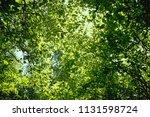 vegetation at the river danube. ... | Shutterstock . vector #1131598724