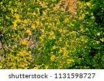 vegetation at the river danube. ... | Shutterstock . vector #1131598727