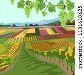 vineyard. multi colored fields. ... | Shutterstock .eps vector #1131610625