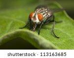 Insect Fly Macro Shot Close Up