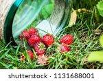 ripe strawberries and a glass... | Shutterstock . vector #1131688001