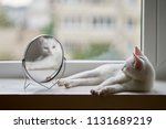 cat looks in the mirror | Shutterstock . vector #1131689219