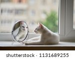 cat looks in the mirror | Shutterstock . vector #1131689255