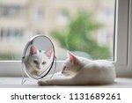cat looks in the mirror | Shutterstock . vector #1131689261