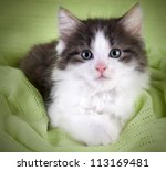 Stock photo cute kitten lying on green blanket and looking at you 113169481