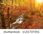 autumn stream in the forest ... | Shutterstock . vector #1131737351