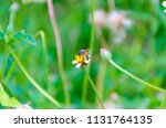 bumble bee looking for nectar... | Shutterstock . vector #1131764135