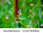 bumble bee looking for nectar... | Shutterstock . vector #1131769841