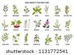 best herbs for kidney stone... | Shutterstock .eps vector #1131772541