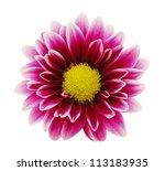 purple dahlia flower with... | Shutterstock . vector #113183935