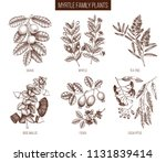 vintage collection of myrtle... | Shutterstock .eps vector #1131839414