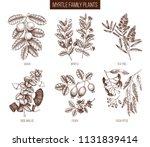 vintage collection of myrtle... | Shutterstock .eps vector #1131839414