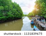 forest of mangroves in tung...   Shutterstock . vector #1131839675
