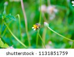 bumble bee looking for nectar... | Shutterstock . vector #1131851759