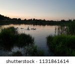 family of swans with chicks at... | Shutterstock . vector #1131861614